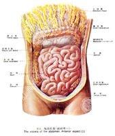 吃冷饮急性肠炎发作怎么治疗?